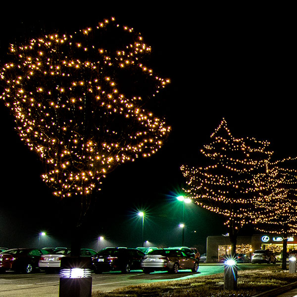 Canopy Wrap Trees  sc 1 st  Traditions Holiday Lighting and Seasonal Decor & Lighting Styles - Traditions